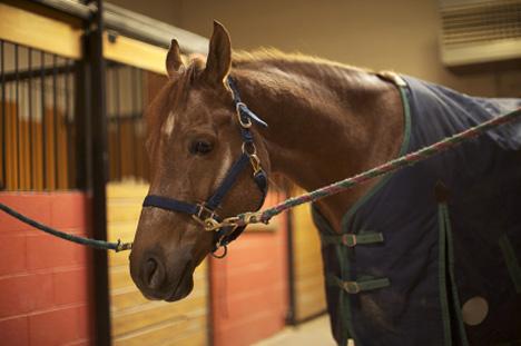 Infrared Horse Blankets